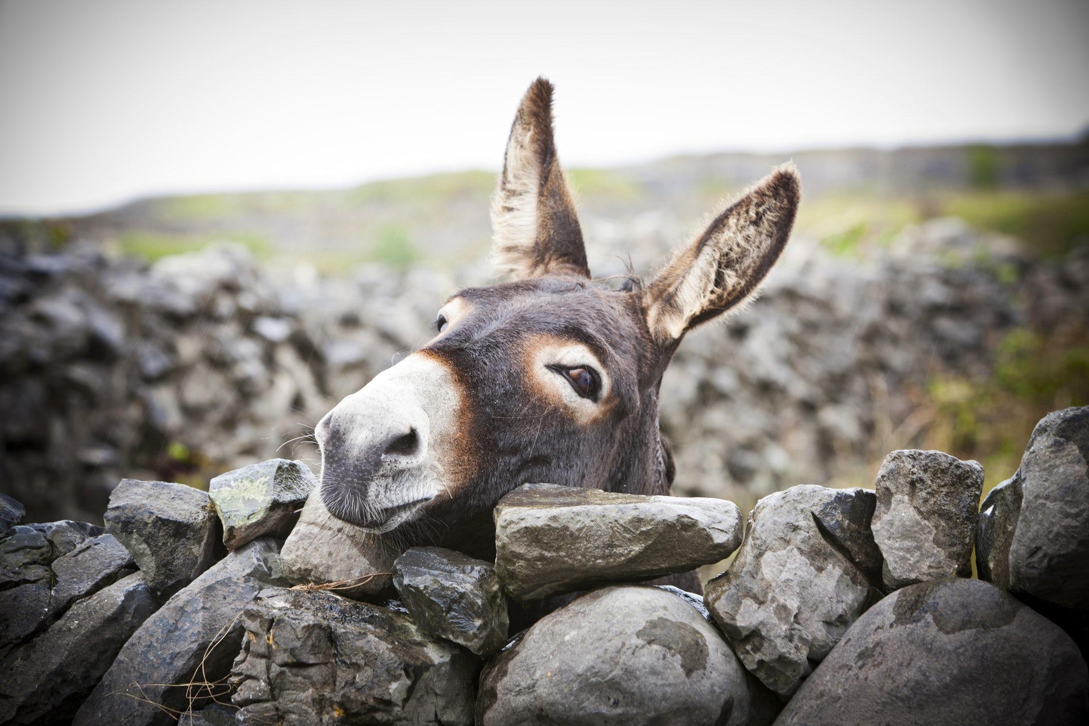 Donkey farm – an unusual attraction near Montenegro's capital