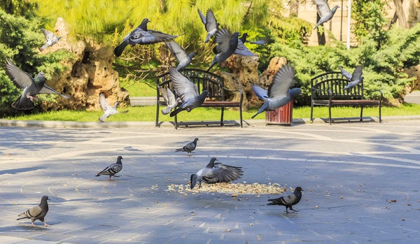 Baku - the city of parks (Part II)