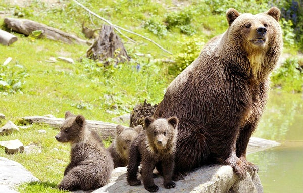 Bear watching in Slovenia: Don't fear the bear