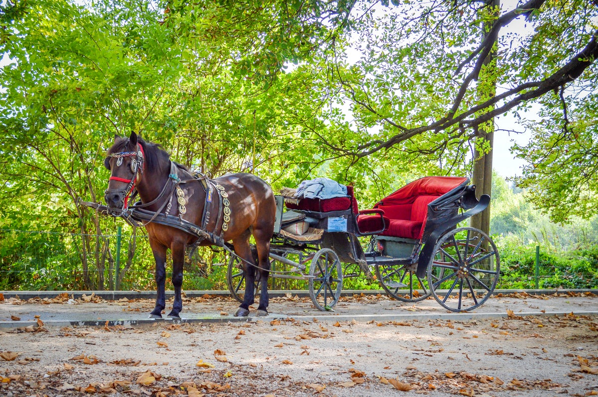 Feel a Cinderella moment at Bosna River Springs