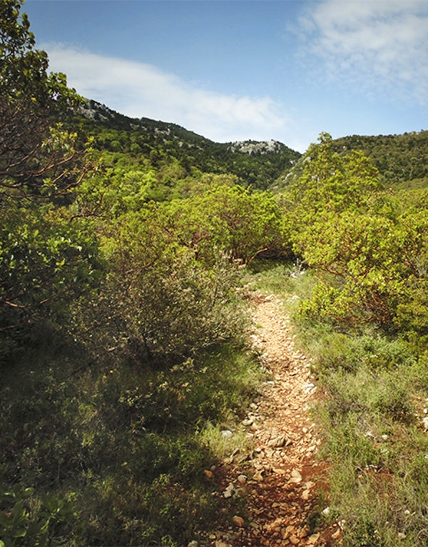 Highest peak in Athens: Mount Parnitha