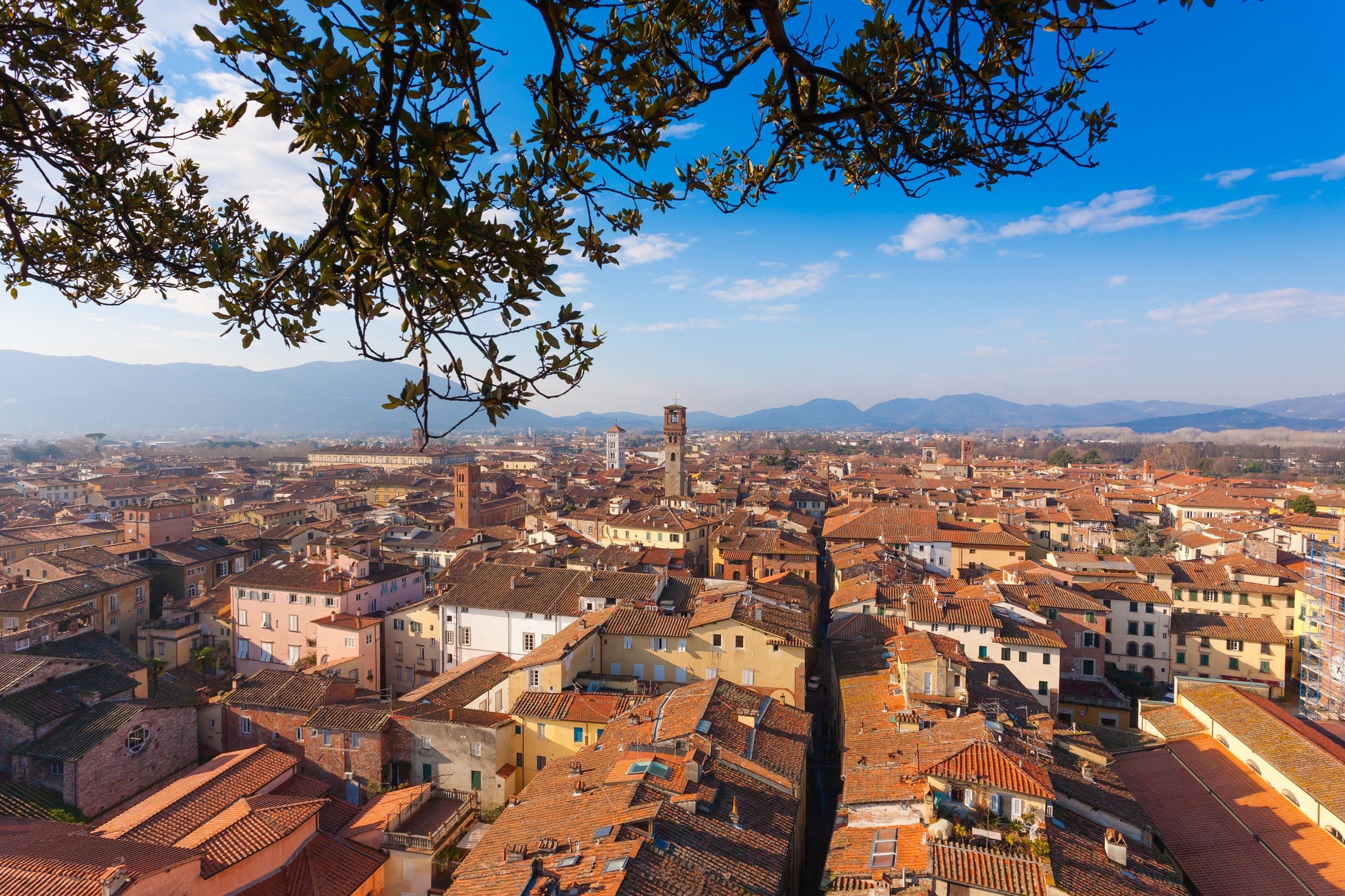 Lucca And Its Tree Tower