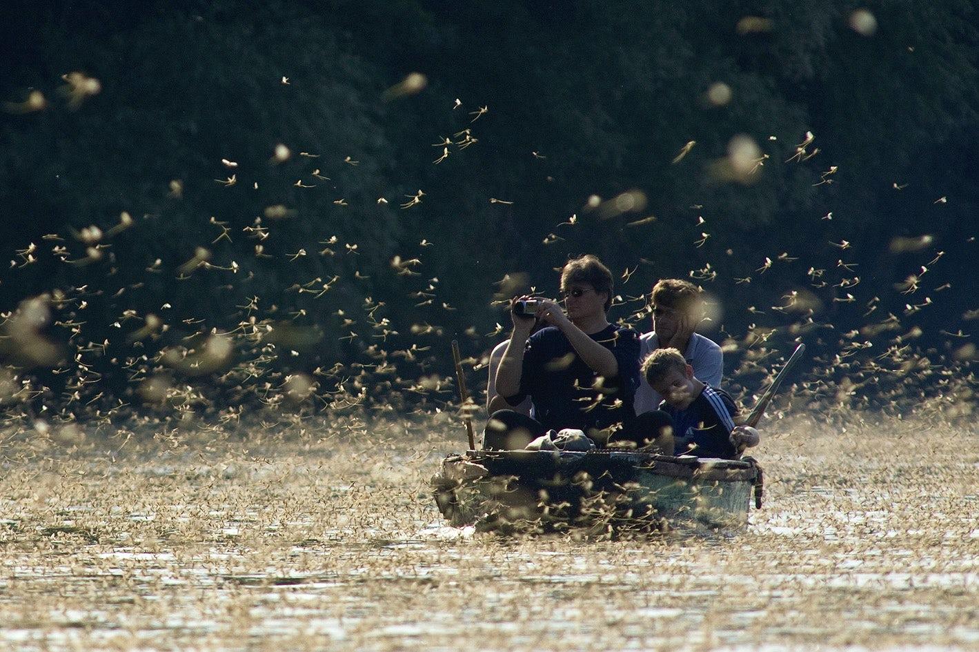 Incredible natural phenomenon of the blooming river Tisa