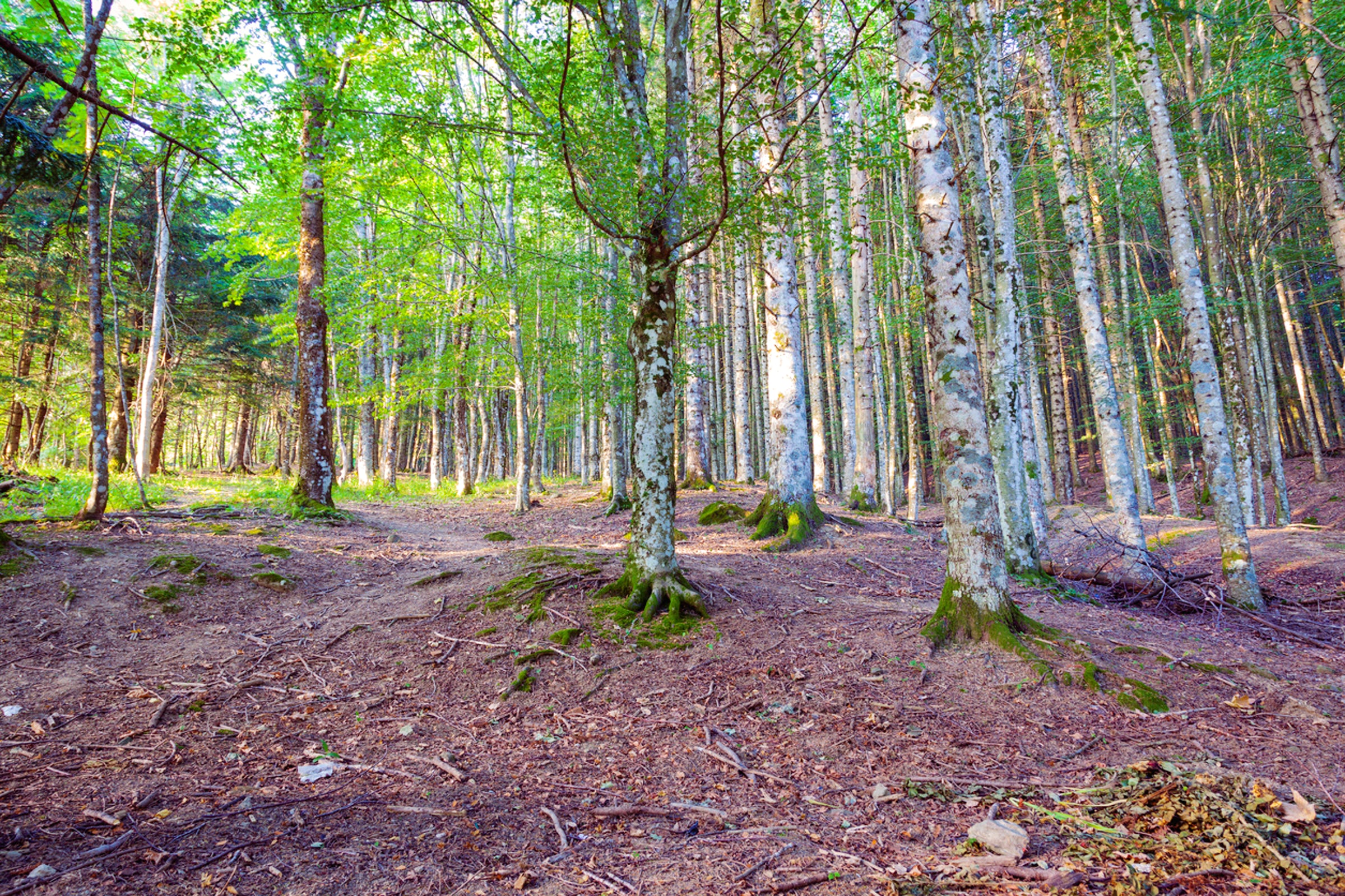 Italian Forest: Casentino National Park