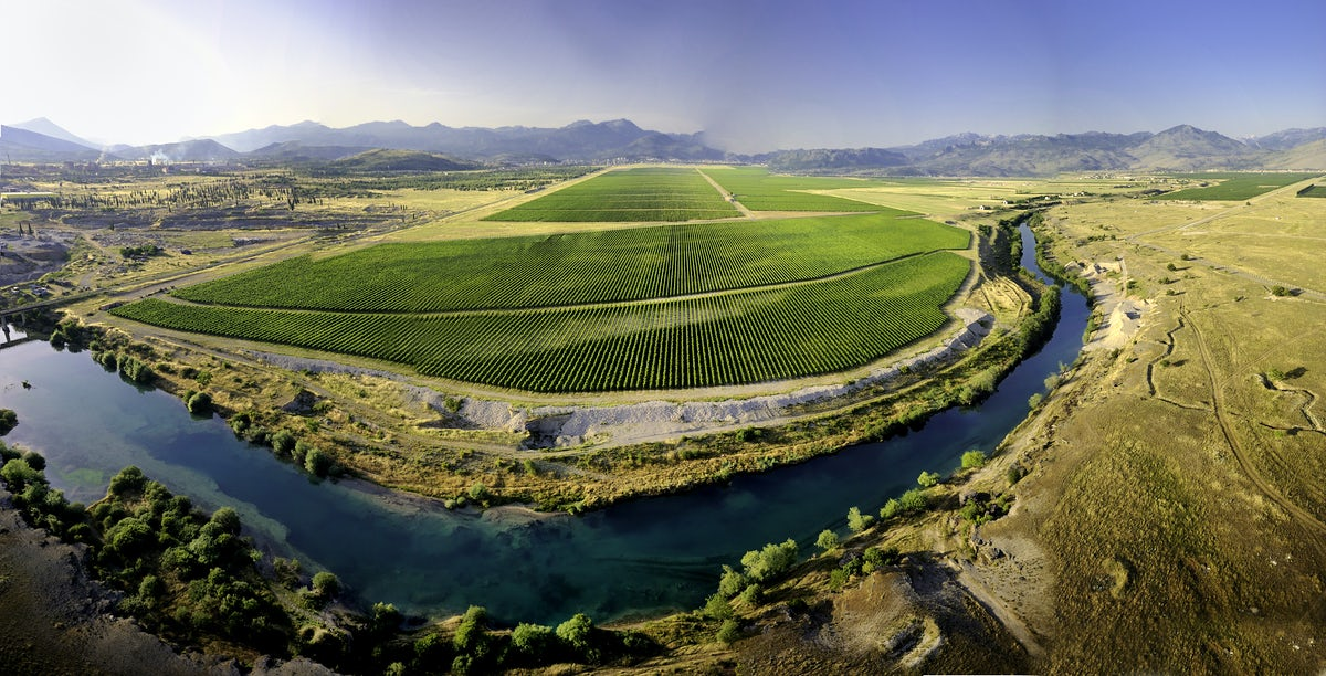 Plantaže Vineyards and the most famous Montenegrin wines