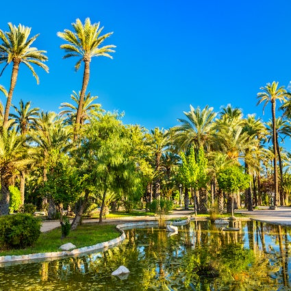 Elche, the city of palms