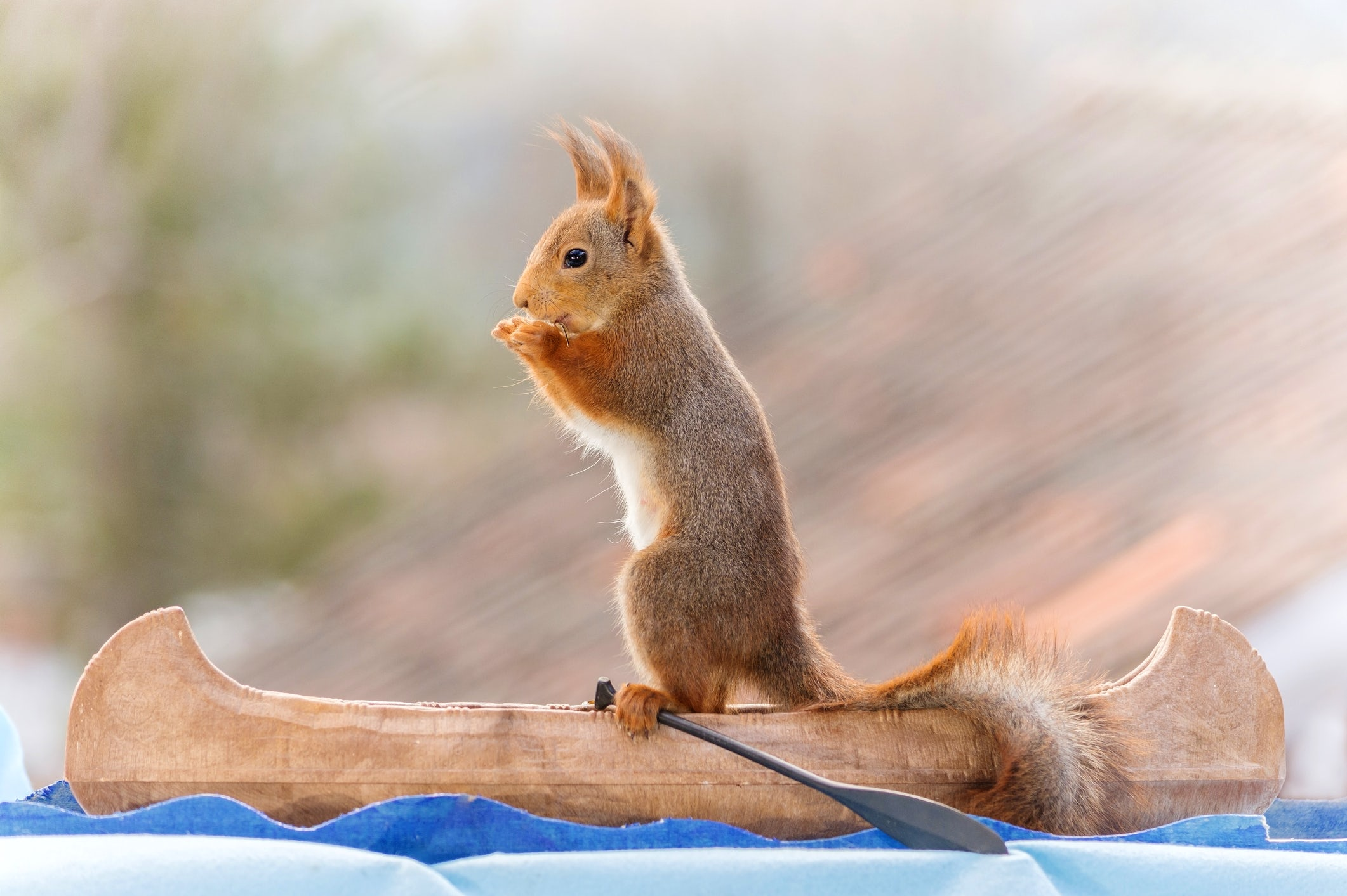 Canoeing the Trebižat River: Wildlife at its purest