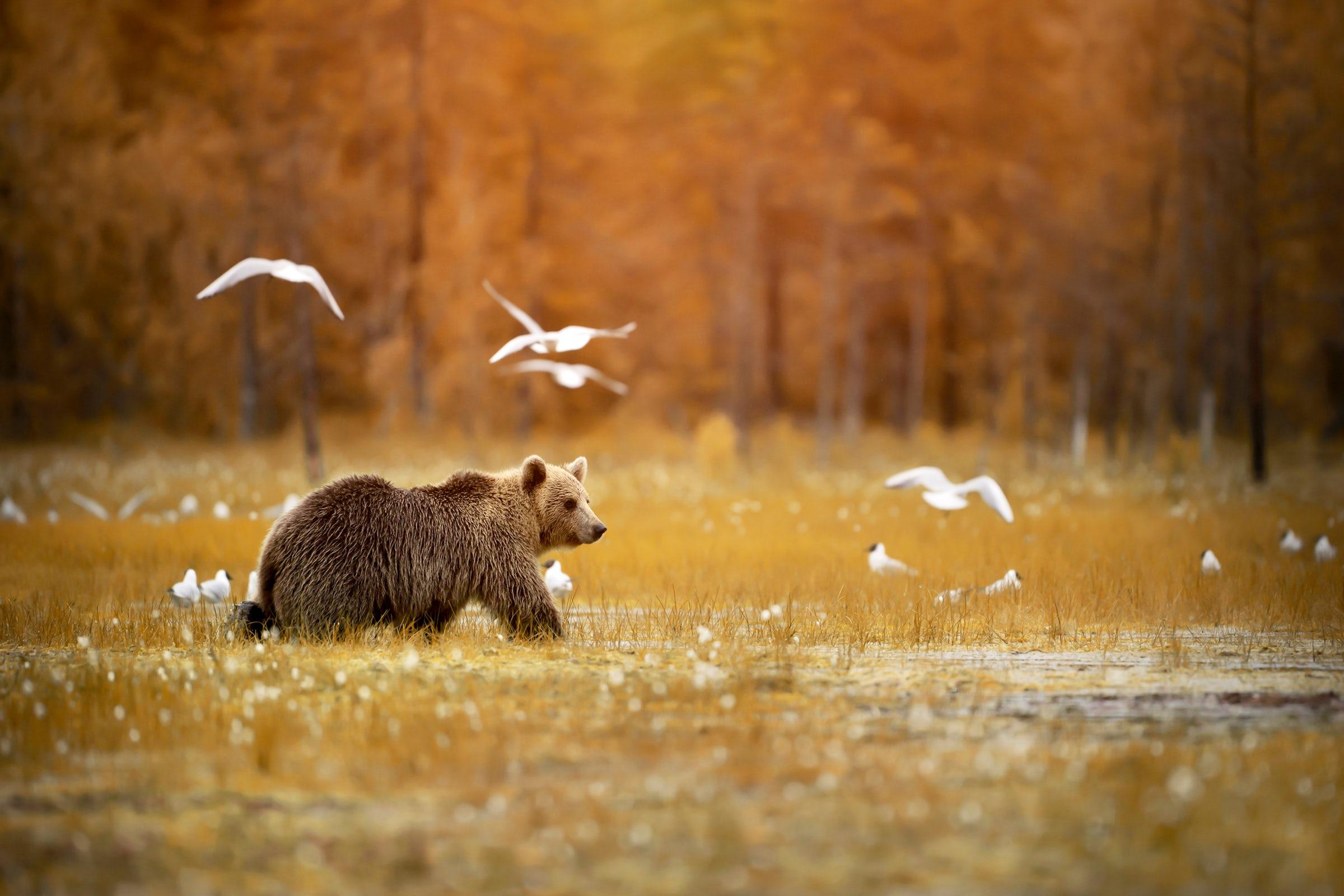 A wildlife Experience
