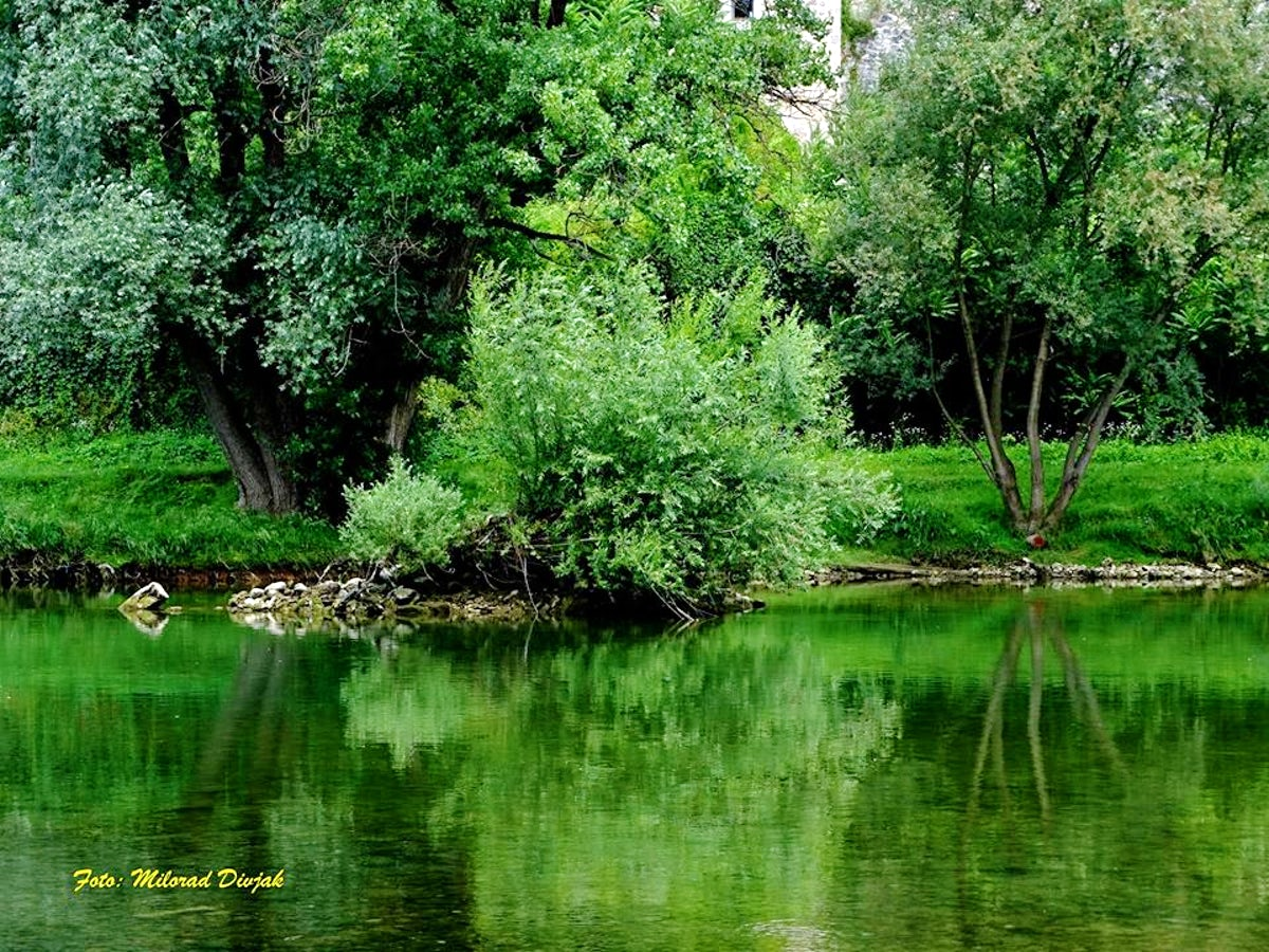 50 shades of green - Vrbas River