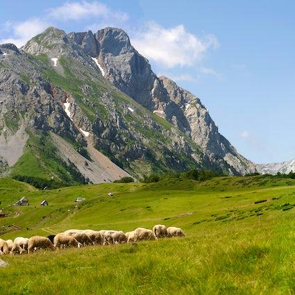 Mountain Komovi