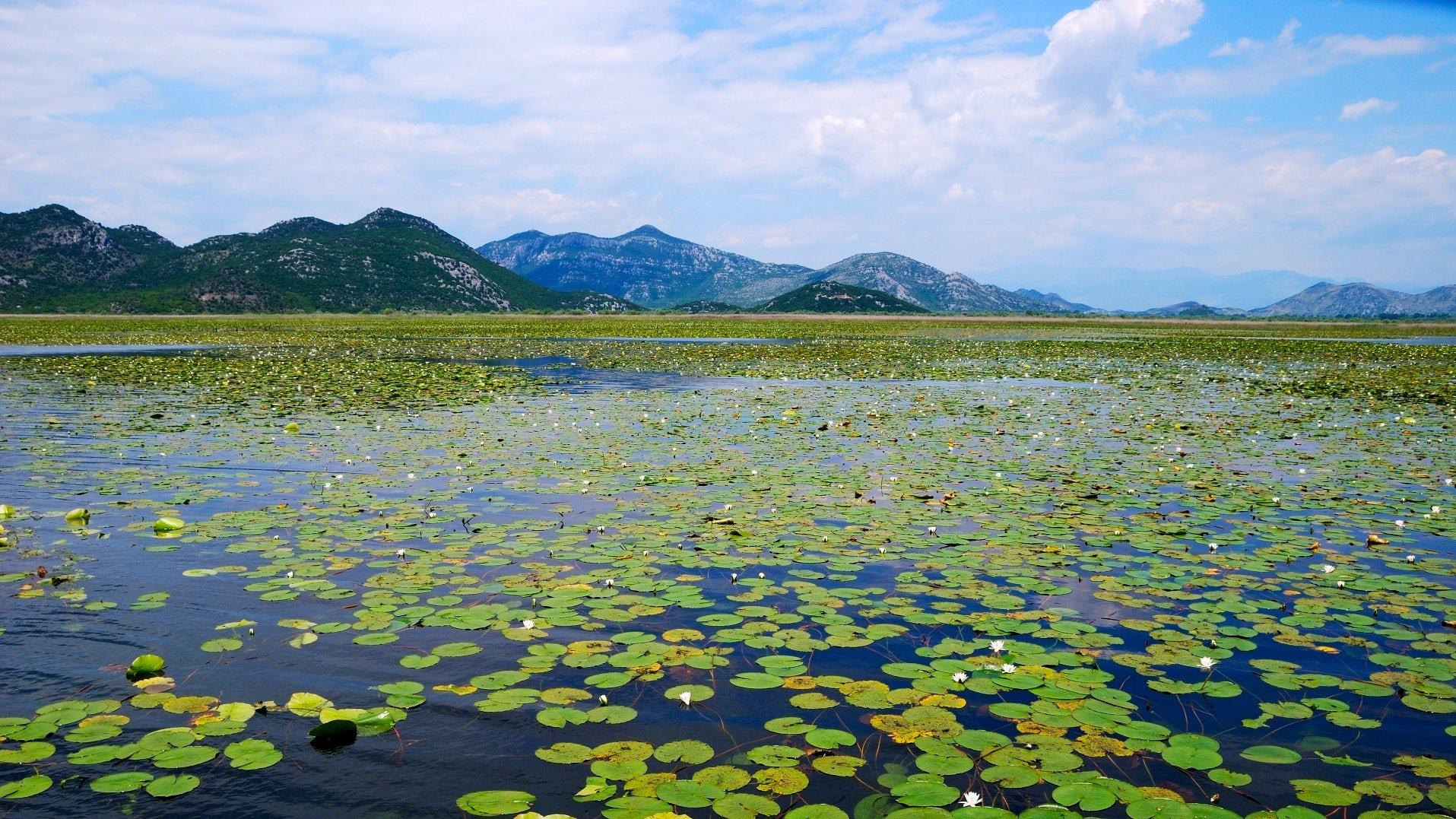 Skadar Lake - a natural jewel of Montenegro